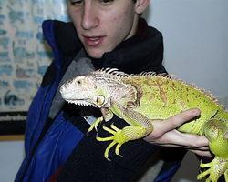 Iguanas as Pets:  Should I Get An Iguana As a Pet?