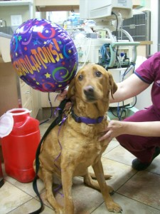 Keep your dog living longer at Animal Medical of New City