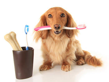 6 Breeds with the Worst Dental Disease