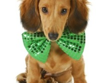 St-patrick's-day-dog-treats