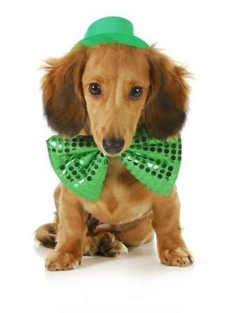 St. Patrick's Day Homemade Dog Treats