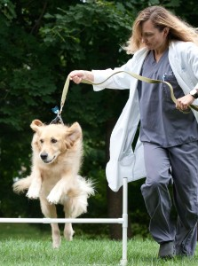 canine physical therapy