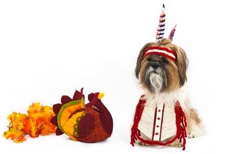 Dog Treats Meatball