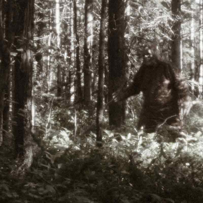 Stony Point Residents Say Veterinarian Discovered Sasquatch