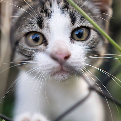 Spaying and Neutering in Cats