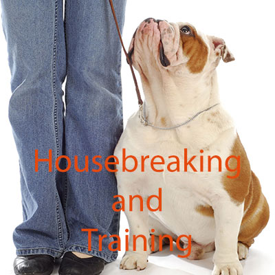 How to Housebreak Your Dog and Teach Him or Her Basic Manners