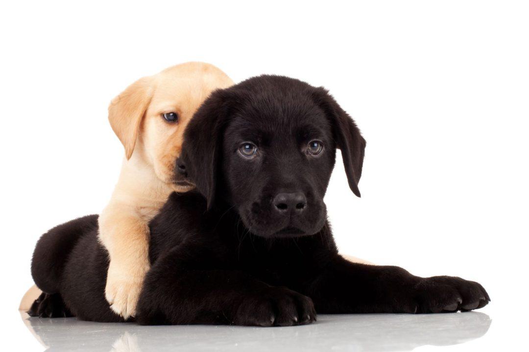 Preventative Health for Dogs