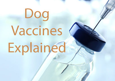 What Kind of Vaccines Do Dogs Need?