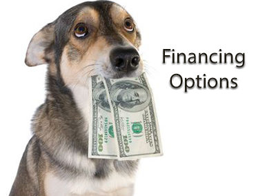 Financing Veterinary Care