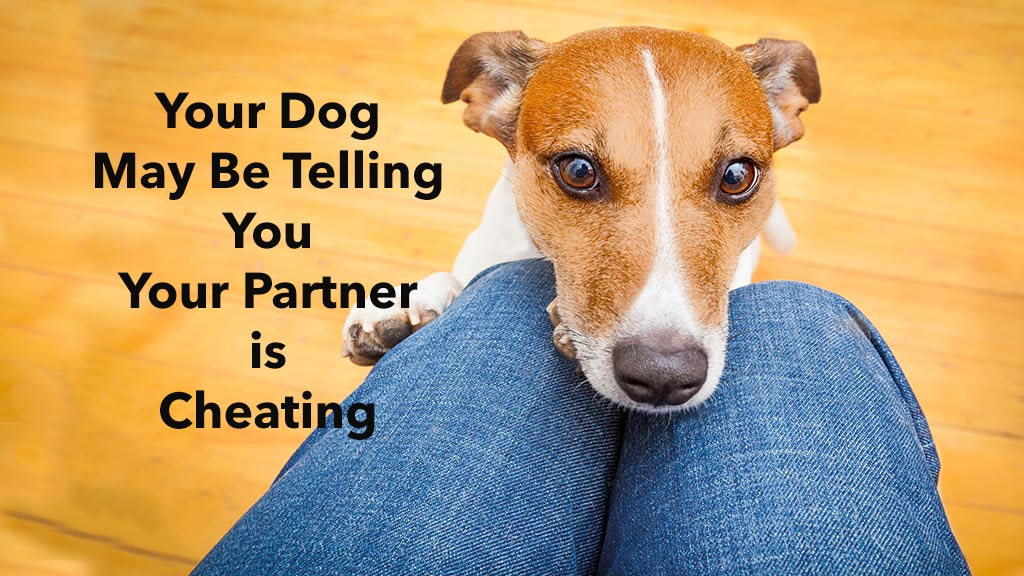Busted!  Stockholm University study says dogs know when spouses cheat.