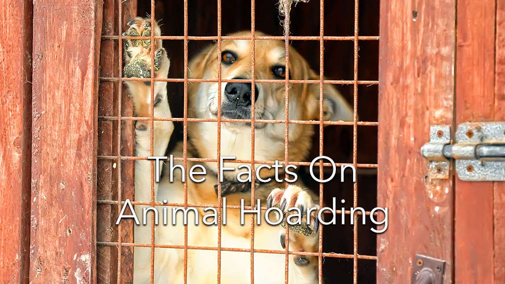 Animal Hoarding:  A mental illness with devastating consequences