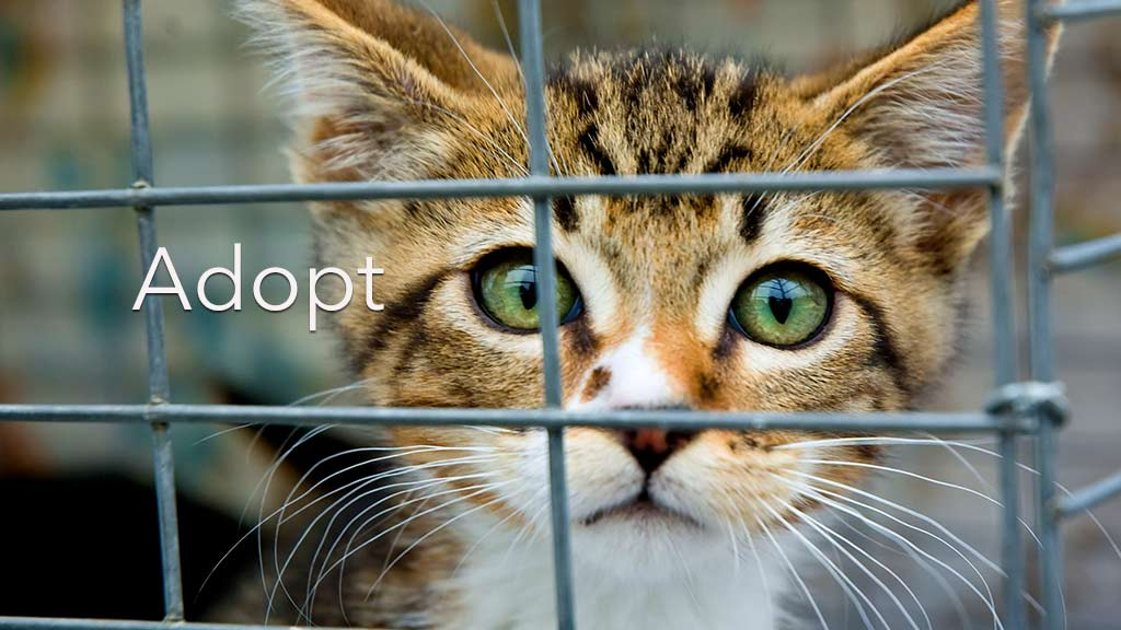 Adoption in Rockland County