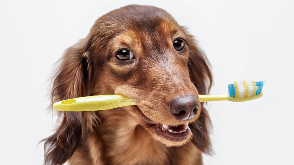 'Why Brush My Pet's Teeth?' Vitality, Health, and a Greater Bond