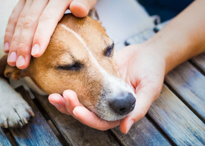 Should I Vaccinate My Dog Against Canine Flu?