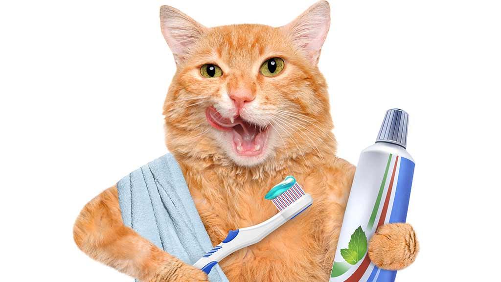 Does Dental Hygiene Really Matter:  Dr. Gittelman Interview