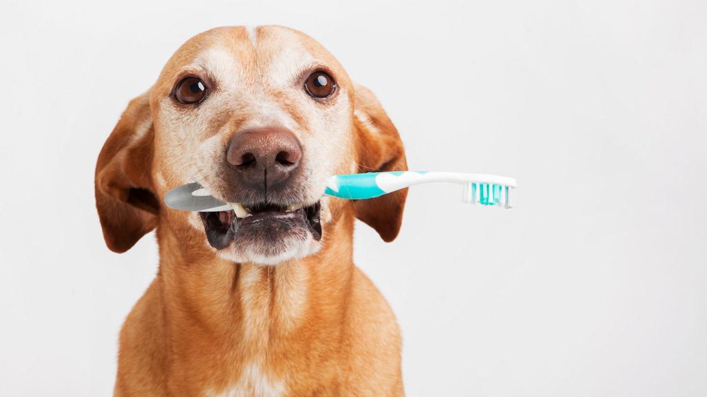 Dr. Gittelman Teaches How To Make Brushing Fun