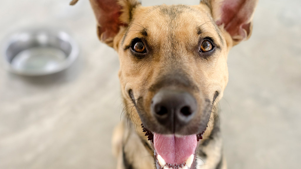 Flip The Lip (And check out your pet's oral health)