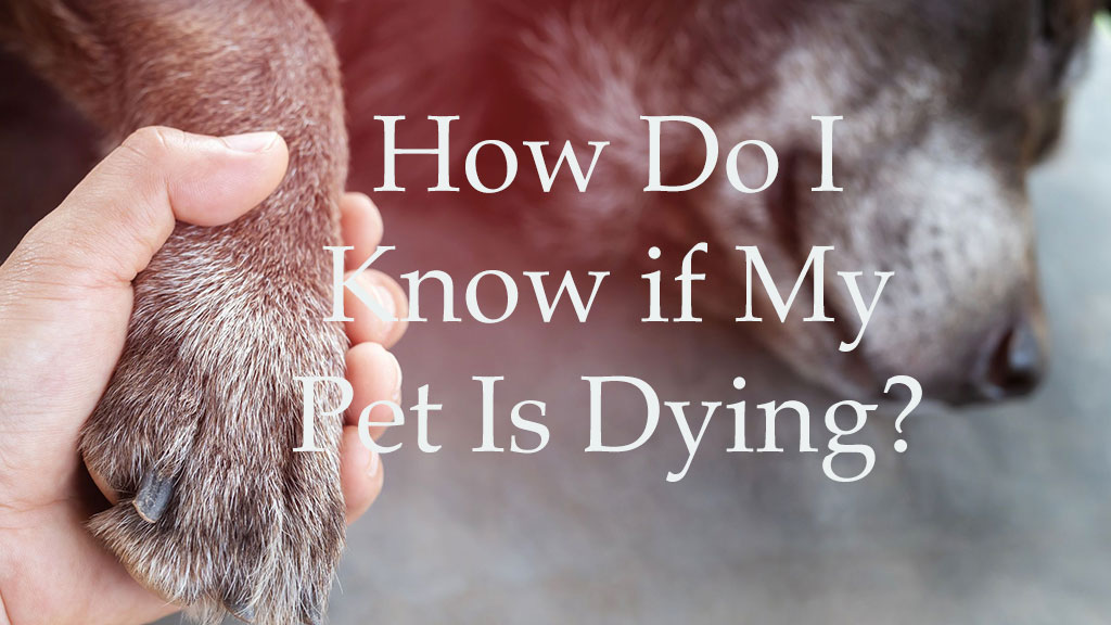 How To Know If My Pet Is Dying