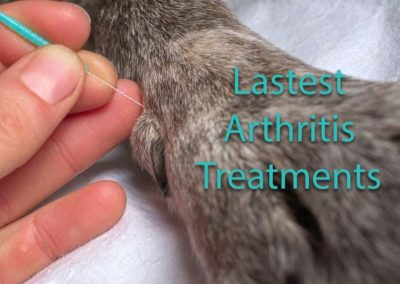 What To Do For Arthritis in Dogs?