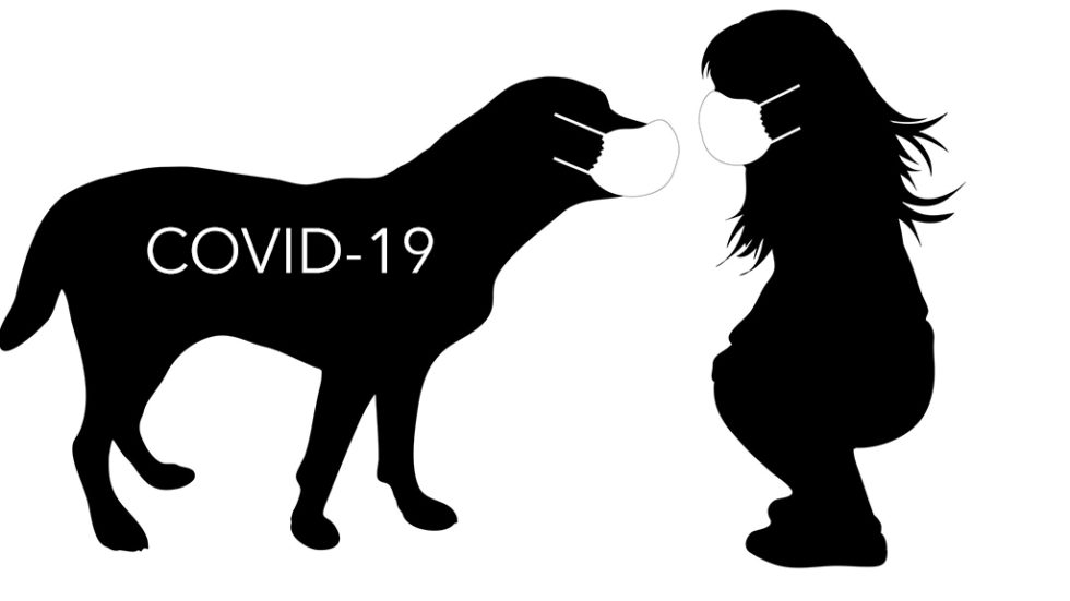 background image showing dog and human living together with COVID-19